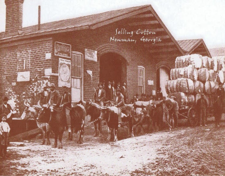 Selling Cotton / Vintage Photo